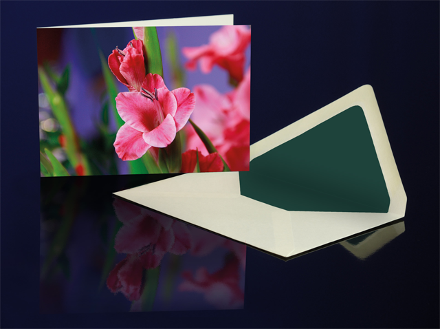 Grusskarte Gladiole Pink aus der Katharine Siegling Collection